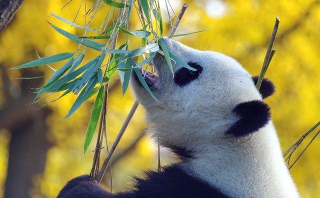 Pyjama Panda pour dormir bien au chaud comme son animal préféré