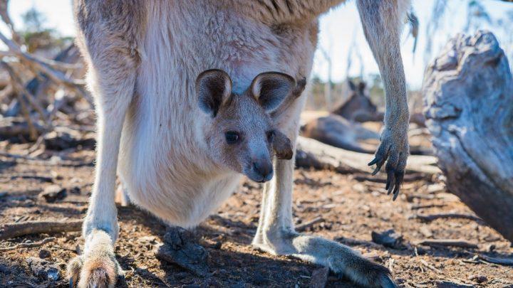slip kangourou : style beauf